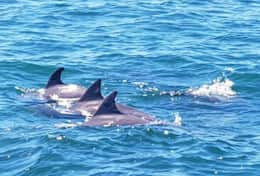 Forster Dolphin Cruise