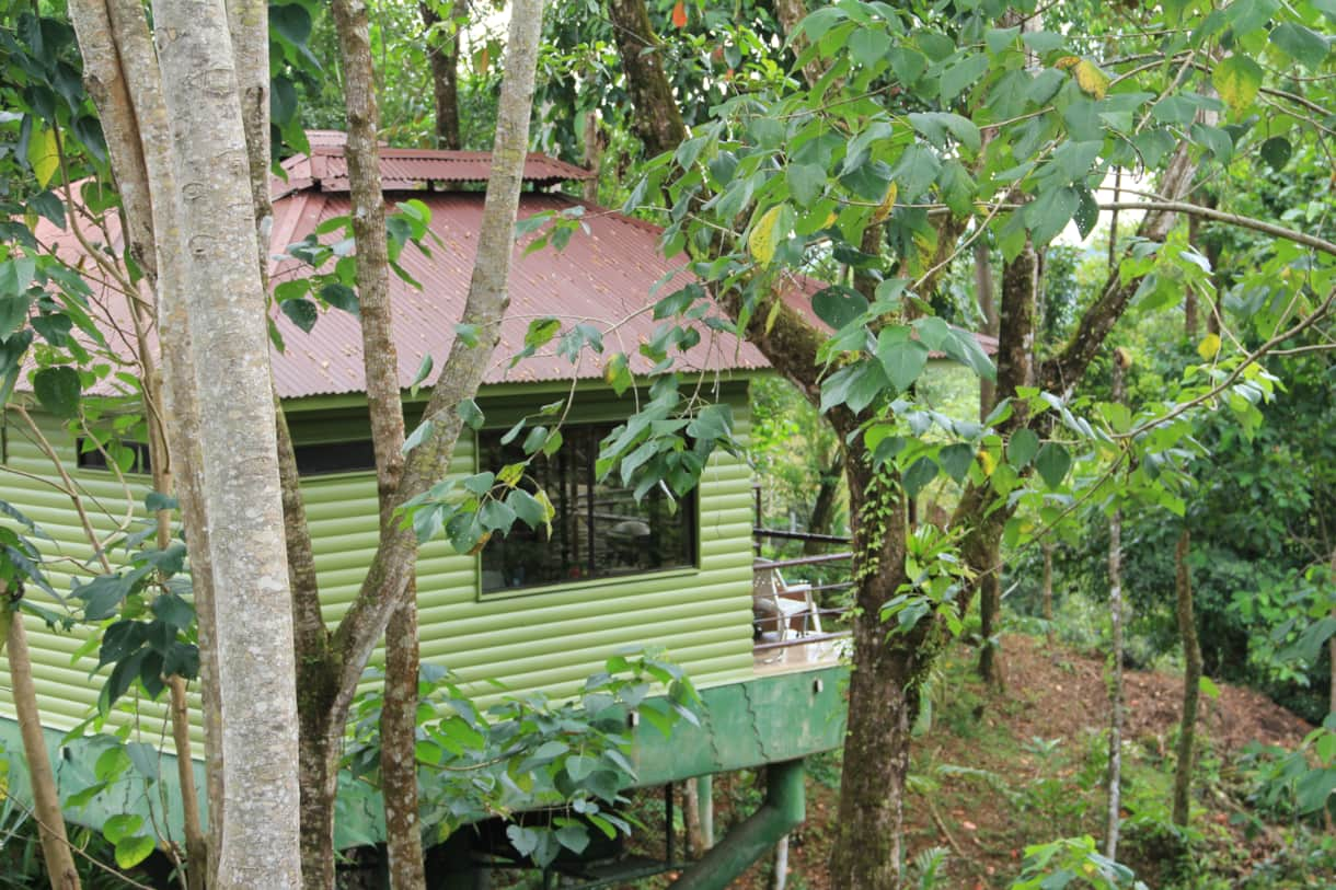 In the Trees