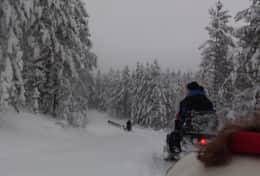 K39 Thistle Cottage - The thrill of a snowmobile safari through snowy forests