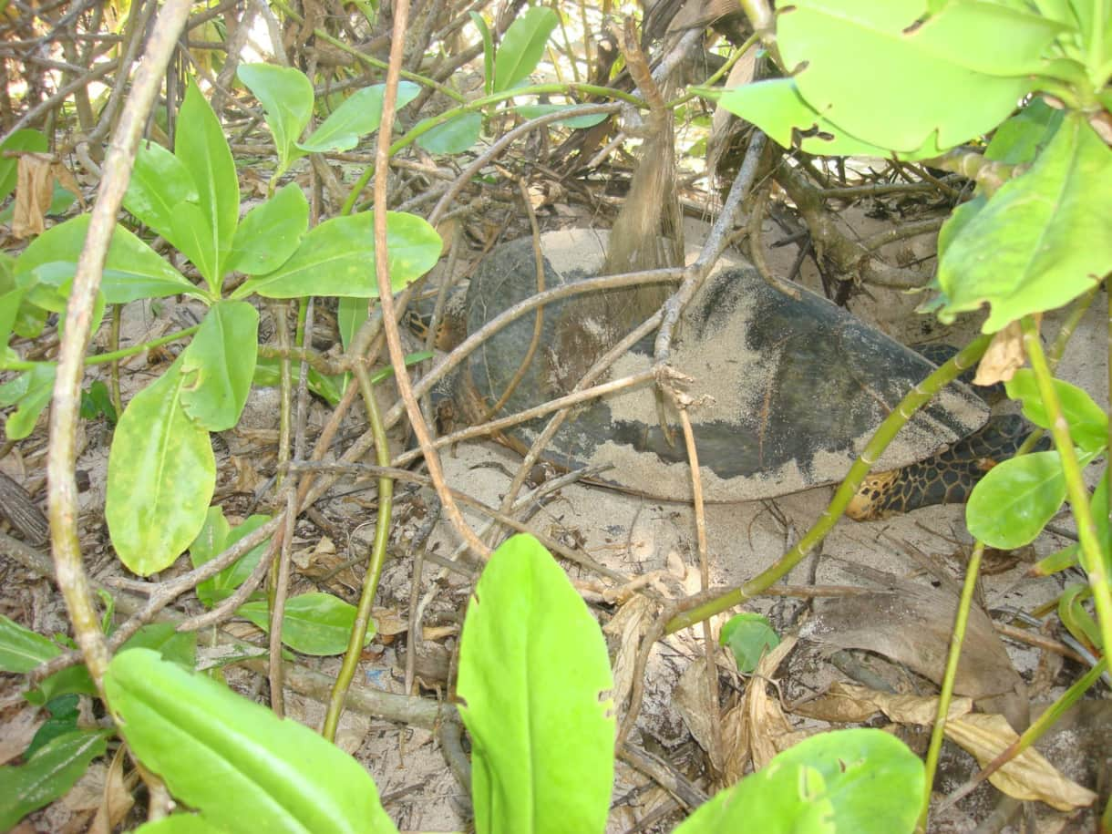 turtles nesting in the garden of the Beach House