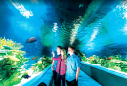 New OdySea Aquarium just 10 mins away!
