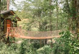 View of bridge and treehouse from path