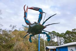 See the giant blue crab!