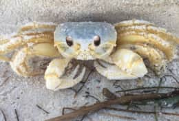 Make friends with ghost crab